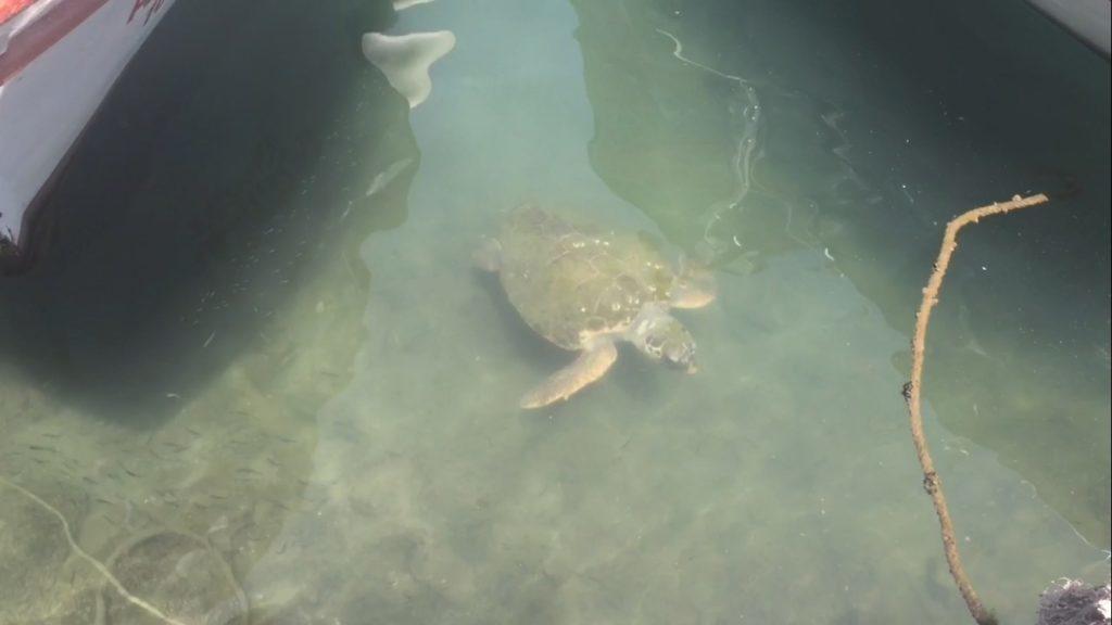 Fethiye Turtles